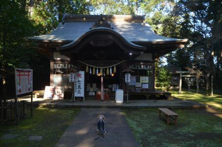 20201104成田豊住熊野神社08