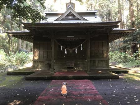 20201116青山神社20