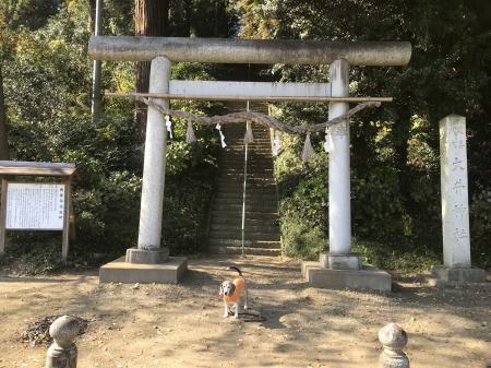20201116大井神社02