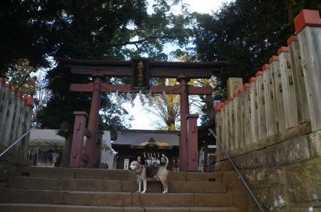 20201119麻賀多神社01