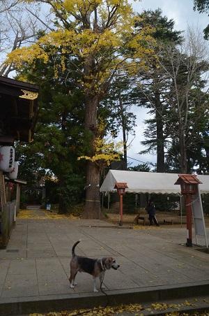 20201119麻賀多神社11