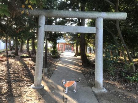 20201116日吉神社03
