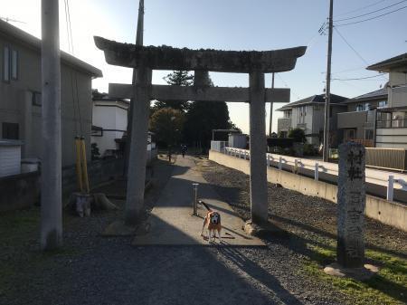 20201116日吉神社01