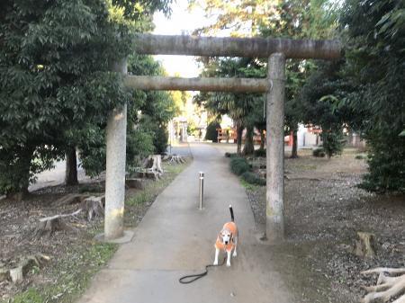 20201116日吉神社17