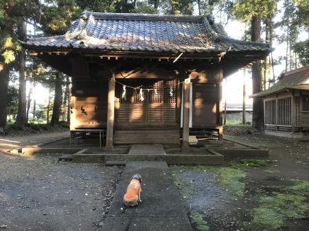 20201116千波神社12