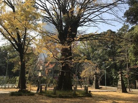 20201118赤坂氷川神社58