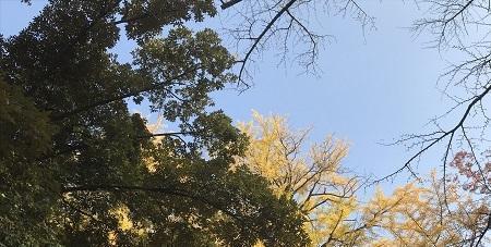 20201118赤坂氷川神社55