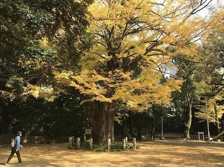 20201118赤坂氷川神社56