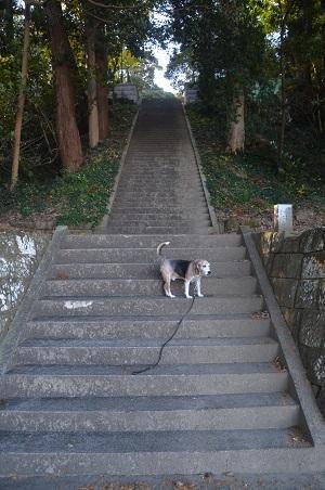 20201128莫越山神社07