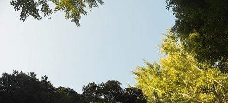 20201128莫越山神社21