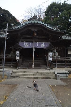 20201129雀神社16