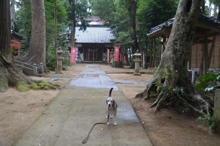 20201202東金日吉神社11