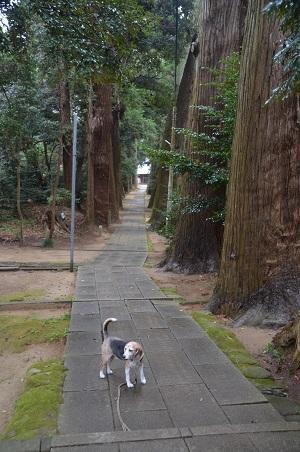 20201202東金日吉神社07