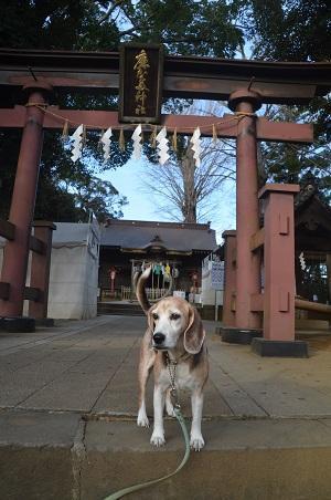 20201218麻賀多神社03