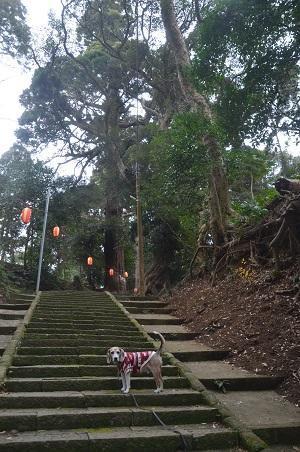 20210106東金日吉神社06