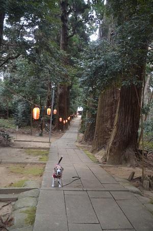 20210106東金日吉神社07