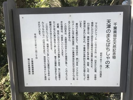 20210206天津神明社20