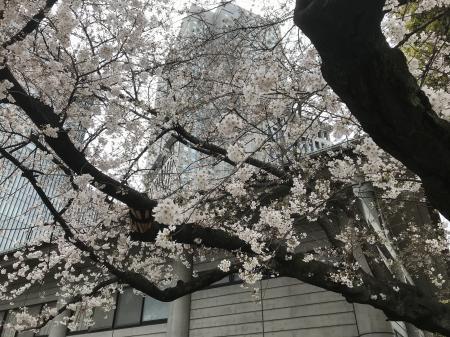 20210322日枝神社20