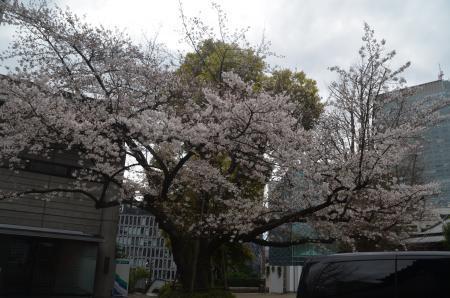 20210322日枝神社19