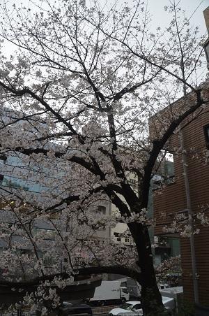 20210322十番稲荷神社12