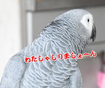 5_しりましぇん
