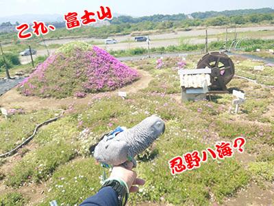 3_忍野八海