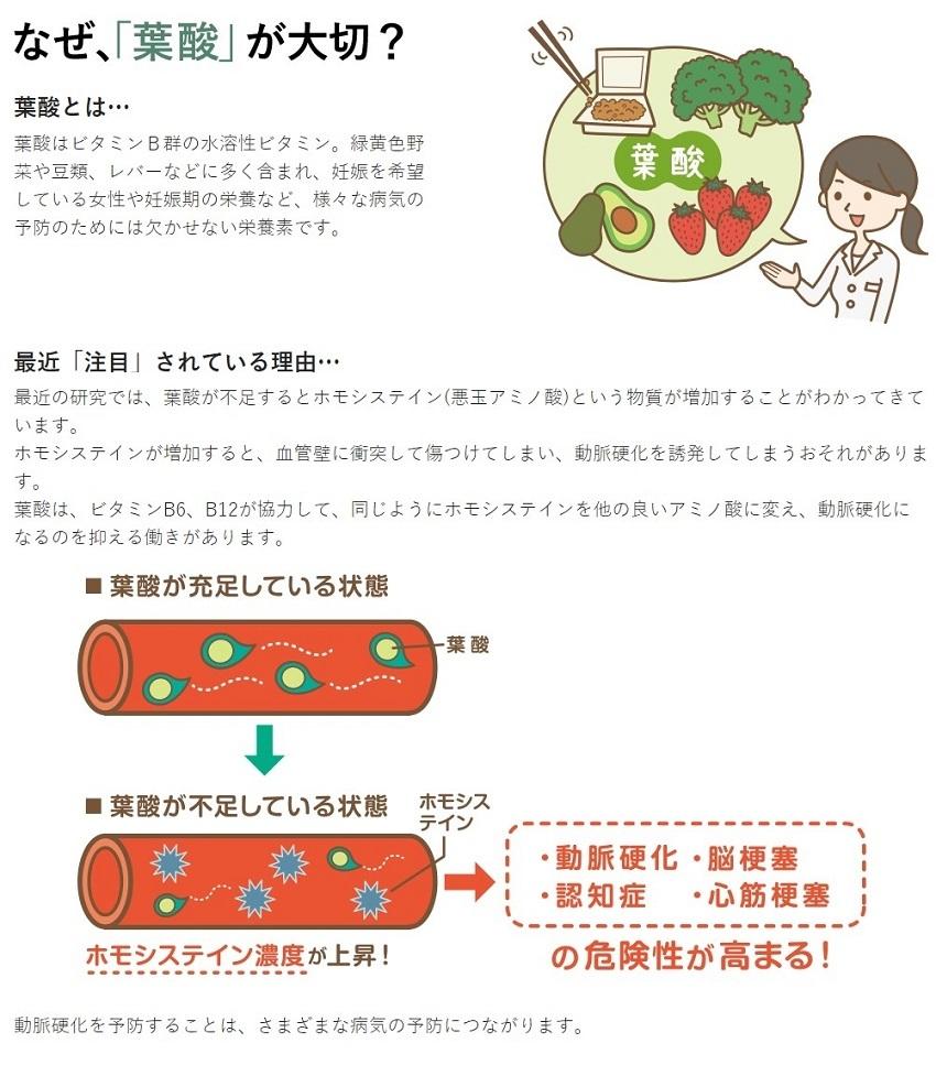 葉酸代謝遺伝子検査