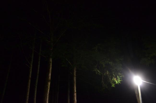 何がなんでもキャンプだし せせらぎ荘キャンプ場 トイプードル 犬連れ キャンプ 湯たんぽ ヘッ電 夜の散歩 ブラックダイアモンド ココア 初キャンプ