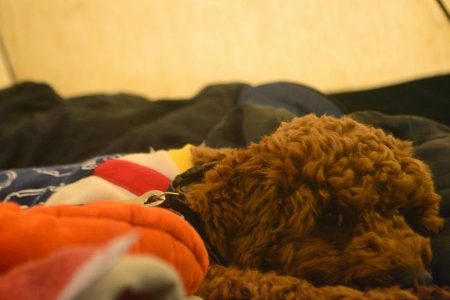 何がなんでもキャンプだし せせらぎ荘キャンプ場 林道 猿焼山 登山道 野生動物 タヌキ ヒゼンダニ 疥癬 落とし物 犬連れキャンプ