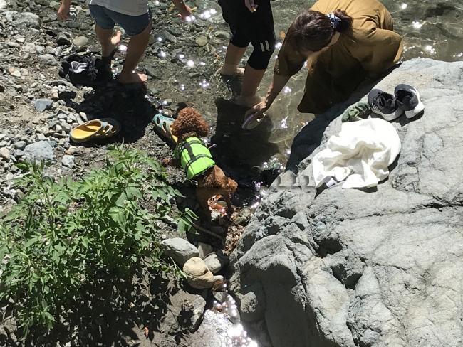 何がなんでもキャンプだし 久保キャンプ場 ココア トイプー 川遊び ライフジャケット 親戚 グルキャン 甥 姪 キャンプ犬