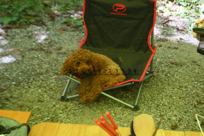 何がなんでもキャンプだし 久保キャンプ場 紅椿の湯 サービスタイム 値上げ ソーシャルディスタンス ココア 呪い 犬連れキャンプ 薪スト あごだし