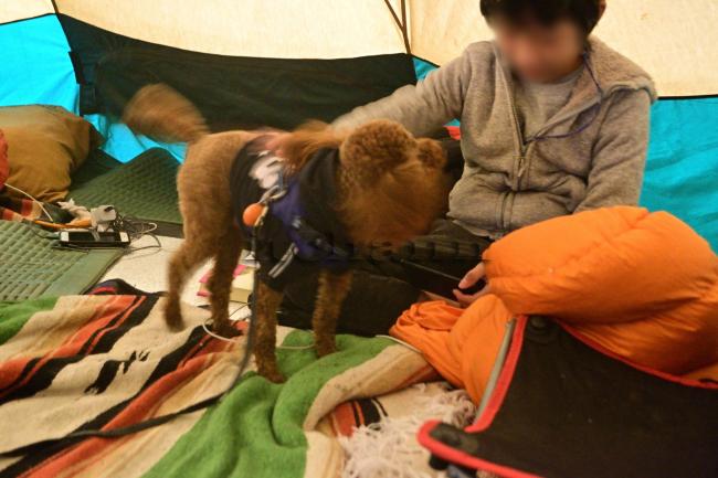 何がなんでもキャンプだし 室久保グリーンパーク 薪スト 少年と犬 馳星周 直木賞 多聞 ココア 神に遣わされた贈り物 譲渡犬 トイプードル
