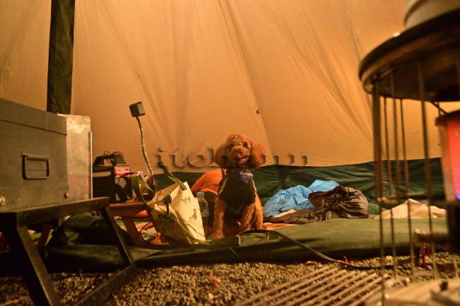 何がなんでもキャンプだし 水之元オートキャンプ場 薪スト ピザ窯 細い薪 広葉樹薪 文化たきつけ テンティピ ココア トイプー キャンプ慣れ おとなしい