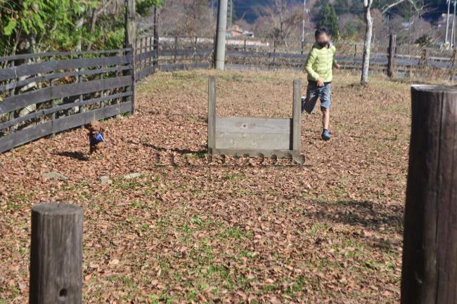 水之元オートキャンプ場 薪スト 撤収 止水 トイレ ドッグラン ココア 紅葉 アジリティ 道志の森