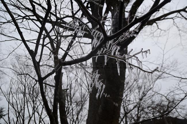 何がなんでもキャンプだし 水之元オートキャンプ場 鹿 シカ 山伏峠 道志みち 樹氷 エコファン 凍結防止 水道 冬キャンプ