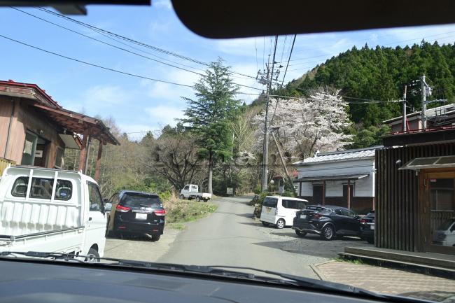 何がなんでもキャンプだし ニュー田代オートキャンプ場 トイプー ココア 末子 卒業 キャンプ テンティピ 密でない 桜 満開