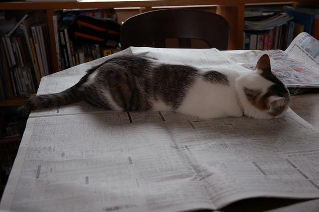 何がなんでもキャンプだし せせらぎ荘キャンプ場 撤収 テント 犬 猫 新聞 PC 乗る 思念 オーラ