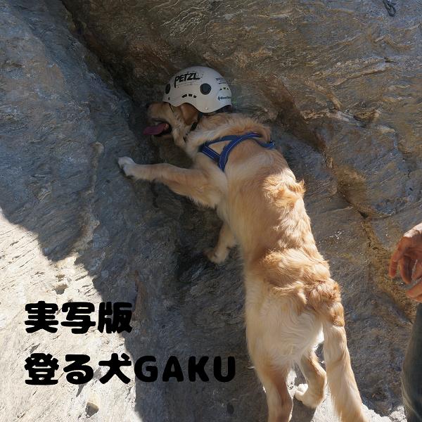 gaku (297-6)