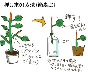 sashiki_gomunoki[1]