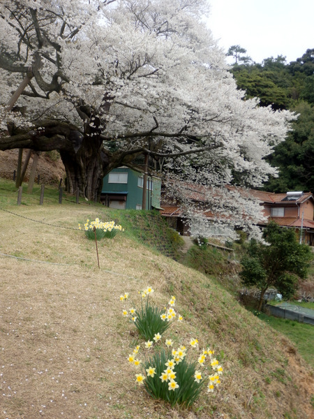 2004004.jpg