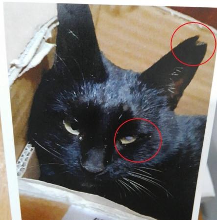 中海岸失踪猫