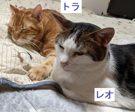 トラとレオ