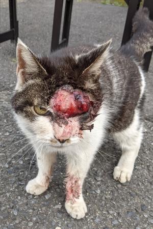 南湖負傷猫20210424