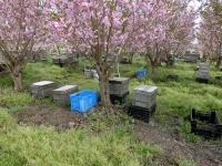 花満開の蜂場(20200407)