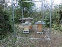 少し離れた巣箱(左の1つ)(20200407)