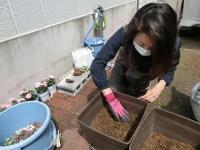 芽だけが土の上に出るように(20200416-6)