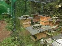 ネットの前でしばしホバリングするミツバチちゃん2020-09-21