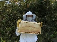 蜜蓋もしっかりかかった完熟はちみつです(20201101)