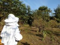 養蜂場の入口はいつもドキドキ(20201101)