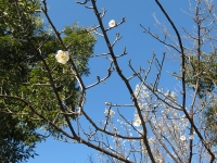 かわいい梅の花♪(20210109)